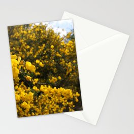 Scotch Broom Stationery Cards