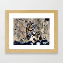 Clouded Leopards Grooming Framed Art Print