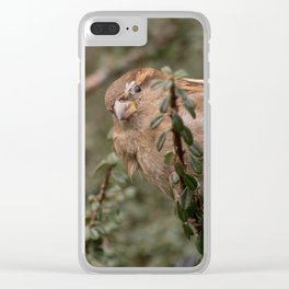 Little sparrow in the tress Clear iPhone Case