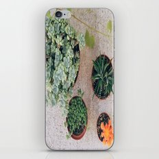Drought Friendly Plants iPhone & iPod Skin