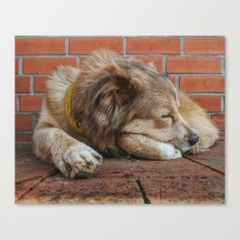 A Nice Shady Sleep Canvas Print