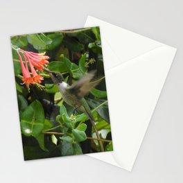Hummingbird in Trumpet Honeysuckle Stationery Cards