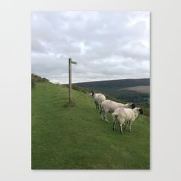 Guidepost amongst sheep Canvas Print