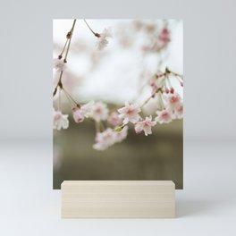 Blush Pink Cherry Blossoms on Brown Mini Art Print