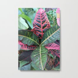 Croton Plant - Rushfoil Metal Print