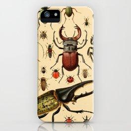 Popular History of Animals Beetles Vintage Scientific Illustration Educational Diagrams iPhone Case