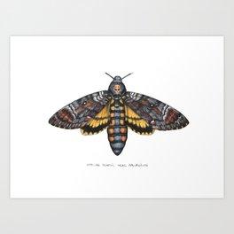 African Death's Head Hawkmoth (Acherontia atropos) Art Print