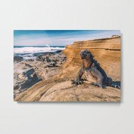 Galapagos marine iguana sun tanning on beach Metal Print