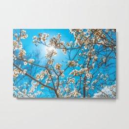 Spring melody Metal Print