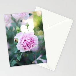 Magic Hour Roses Stationery Cards