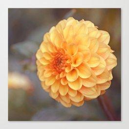 Shiny Yellow Sweet Pixie Dahlia Canvas Print