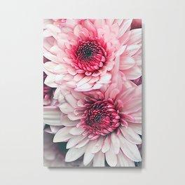 Pink asters. Metal Print