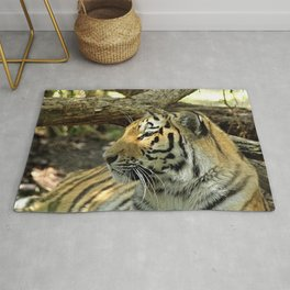 Asian Bengal Tiger Wildcat Resting Portrait Forest Rug