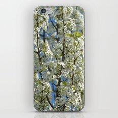White Flowering Tree iPhone & iPod Skin