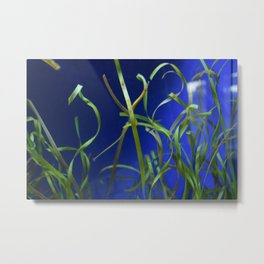 Find the Pipefish Metal Print