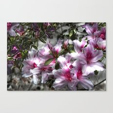 Flower Power, natural healing for the soul Canvas Print