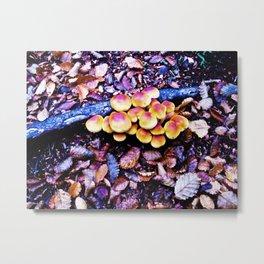 Fungi nature. Metal Print