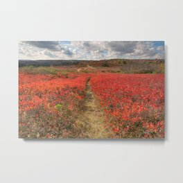 Autumn Huckleberry Trail Metal Print