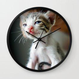 Cat by Pranav Kumar Jain Wall Clock