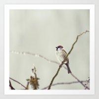 sparrow Art Prints featuring SPARROW by SUNLIGHT STUDIOS  Monika Strigel