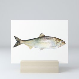 American Shad Mini Art Print