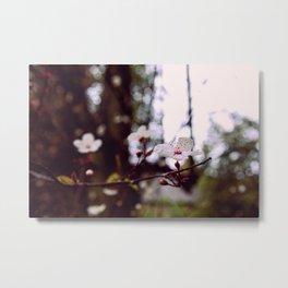 Hanami 1 Metal Print