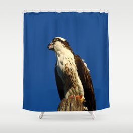 Osprey With His Dinner Leftovers Shower Curtain