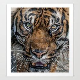 Tiger's Eyes Art Print