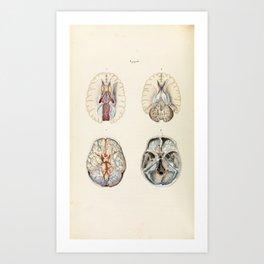 Vintage Illustration of Human Brain Art Print