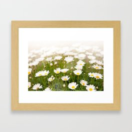 White herb camomiles clump Framed Art Print