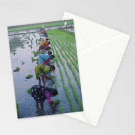 Colour In The Paddy Stationery Cards