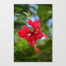 Scarlet Flower Canvas Print