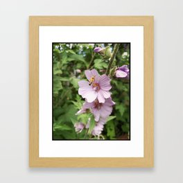 Pretty Pollenater  Framed Art Print