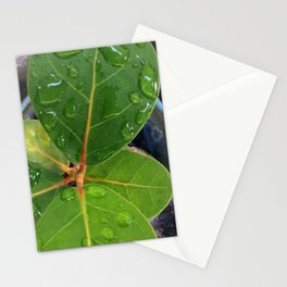 Raindrops on Baby Sea Grape Leaves Stationery Cards