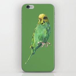 Budgie, parakeet, budgerigar,bird art, budgie painting iPhone Skin