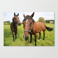 horses Canvas Prints featuring horses by Falko Follert Art-FF77