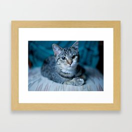 lover cat Framed Art Print