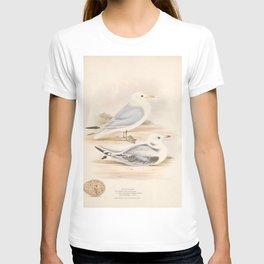 Kittiwake, larus tridactylus5 T-shirt