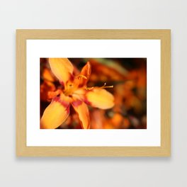 Hansville, WA- Orange Flowers Framed Art Print