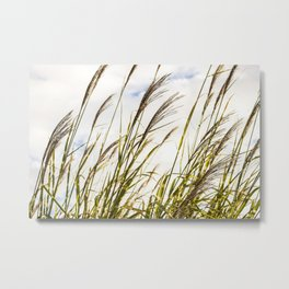 Sky through the tall grass Metal Print