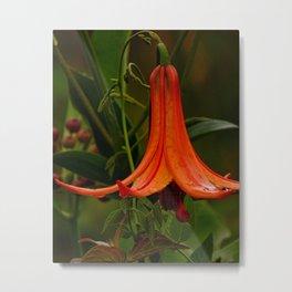 Wild Lily Love Metal Print
