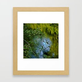 Sky Trees and Water Framed Art Print