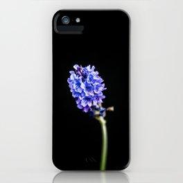 Lavandula pinnata iPhone Case