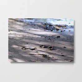 Tiny Crabs on the Beach Metal Print