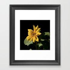Rogue Sunflower Framed Art Print