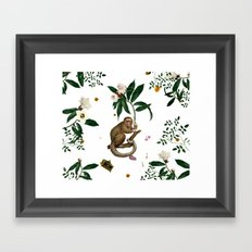 Monkey World: Amber-Ella - White Framed Art Print