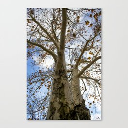 God's Wood Canvas Print