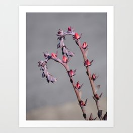 Plush Plant flowers are blooming Art Print
