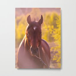 horse collection. autumn Metal Print