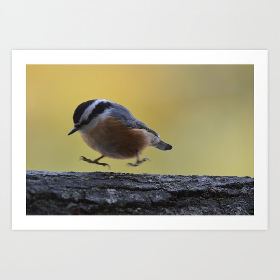 Red Breasted Nuthatch - Hopping Mad Art Print